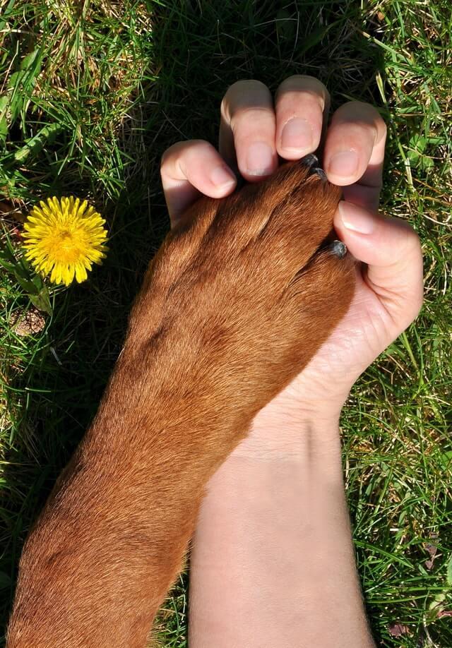djurkommunikation